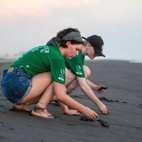 Dozens of baby sea turtles make their way to the sea after being released by Projects Abroad international conservation volunteers.
